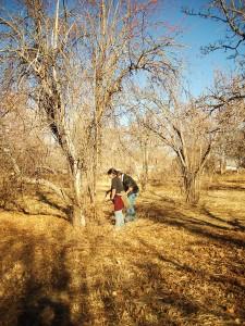 Erda's Orchard