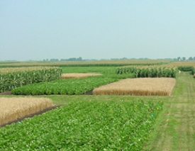 Crop Rotation. Image from http://soilquality.org/images/row_crop_rotation_crops.jpg
