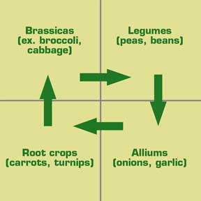 Crop Rotation Example. Image from: http://www.cedarmill.org/news/810/Your_Living_Soil.html