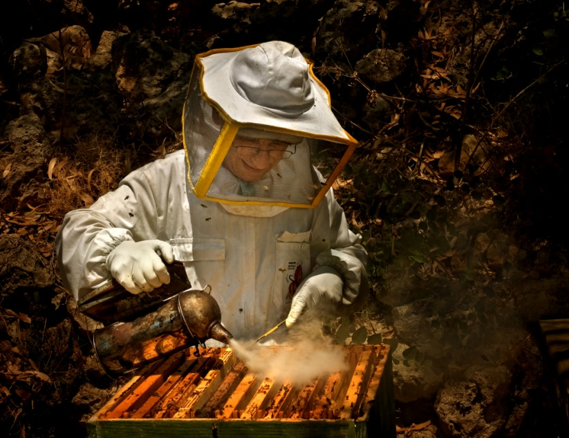 how to bee come a beekeeper abq stew