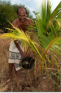 A Sri Lankan man fills an olla used to water a tree. Image from: permaculturenews.org