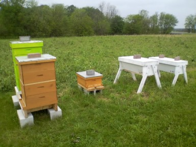 The two types of hives: Langstroth to the left, and Top-Bar to the right
