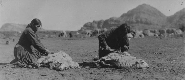 Sheep is Life Shearing sheep. Southern Navajo Agency 1933. Image from: https://tskies.com/sheep-is-life-the-story-of-the-navajo-and-the-churro/