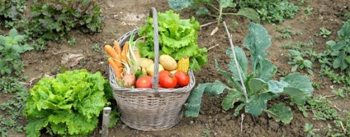 Image from: http://cdn.moneycrashers.com/wp-content/uploads/2010/03/garden-vegetable-basket.jpg