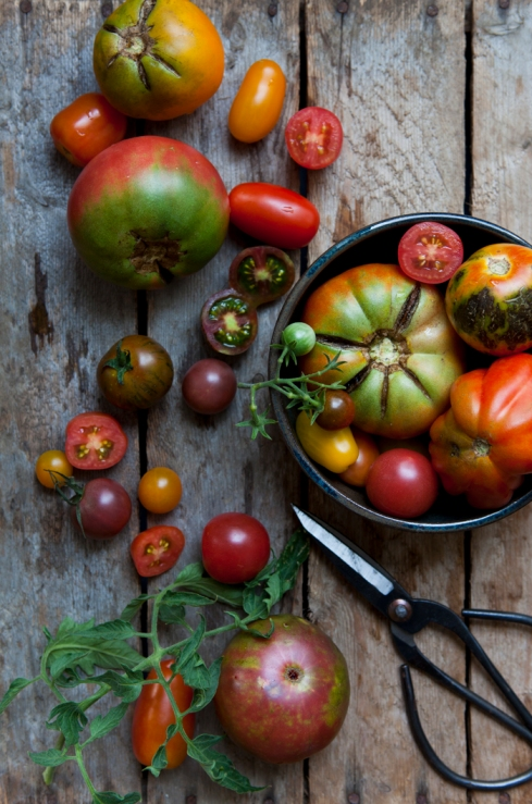 Heirloom Tomatoes, by Nicole Franzen.