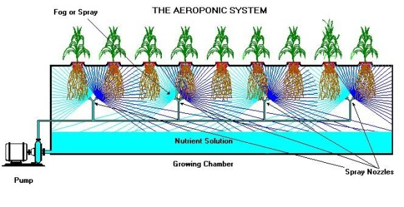 aeroponic diagram