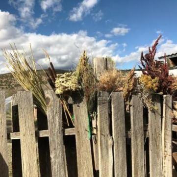 Various wild plants, including horsetails, cattails, yarrow, wild grasses from Penasco, poor man's pepper, snakeweed and dock.