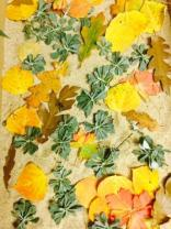 Leaves from the forest beyond Penasco. Colors of Fall that inspire my designs.