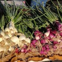 Radishes. Image credit: Los Ranchos Growers' Market
