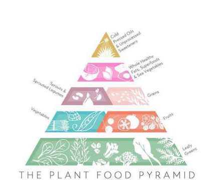 Figure 3; Plant based pyramid