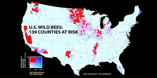 Photo 3 (bee map)